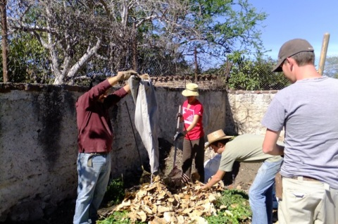 Compost making: Adding a layer of dried leaves