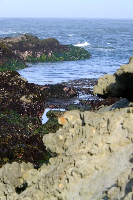 Intertidal Zone2