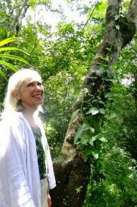 Vanilla growing up a tree